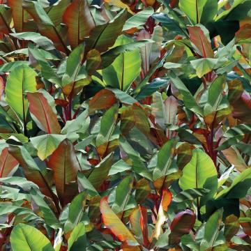 Devon&Devon Costarica Green